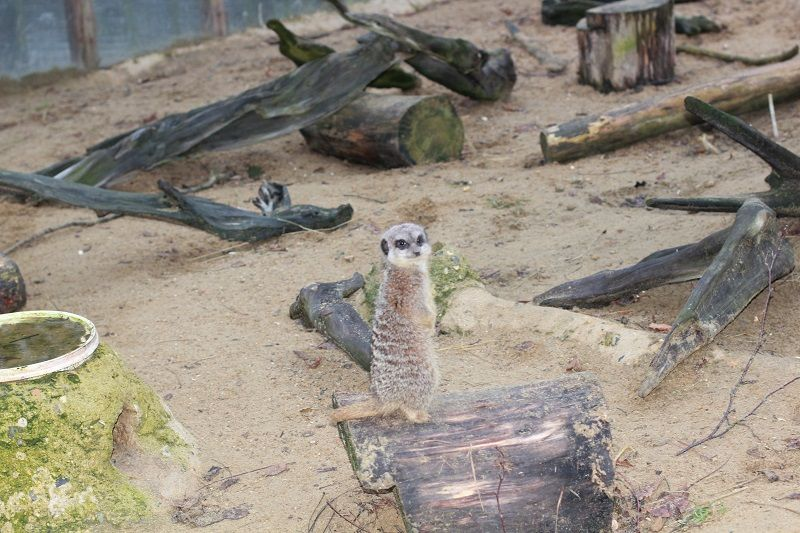 Зоопарки Британии. Wingham. Zoos Britain. Wingham