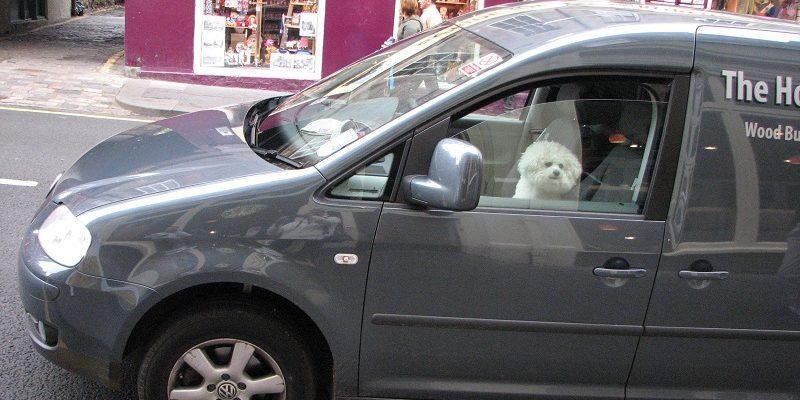 Эдинбург (Edinburgh). Собаки